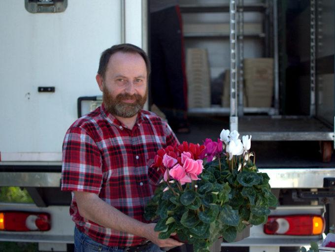 Dostawa cyklamenów do Kwiaciarni pod Zagarem