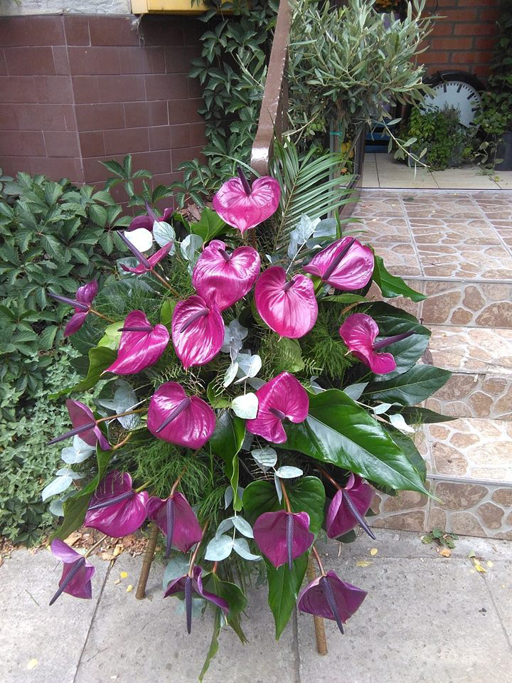 wieniec pogrzebowy, Kwiaciarnia Pod Zegarem Kielce